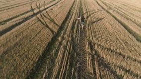 Hombre feliz acertado joven que corre en el campo, brazos extendidos Visión panorámica aérea almacen de video