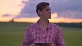 Hombre hermoso joven que mecanografía en la tableta y la situación en el campo del trigo o del centeno, cielo rosado arriba con l almacen de metraje de vídeo