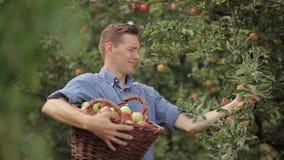 Hombre hermoso que recolecta manzanas en el jardín almacen de metraje de vídeo