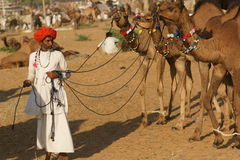 Hombre indio con los camellos Imagenes de archivo