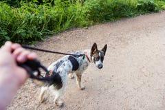 Hombre irreconocible que camina un perro en un camino polvoriento seco imagen de archivo