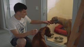 Hombre joven con su perro en la enfermería para los animales almacen de video