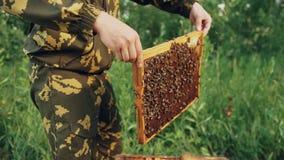 Hombre joven del apicultor que lleva a cabo el marco de madera con las abejas para comprobar mientras que trabaja en colmenar Fotografía de archivo libre de regalías
