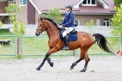 Hombre joven del jinete en caballo de bahía en deporte ecuestre Foto de archivo libre de regalías