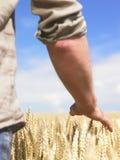 Hombre joven en campo de trigo Imágenes de archivo libres de regalías