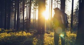 Hombre joven en la más forrest silencioso con luz del sol Fotos de archivo libres de regalías
