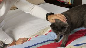 Hombre joven hermoso que abraza a su Gray Cat Pet metrajes