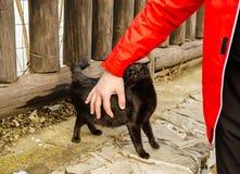 Hombre joven que acaricia el gato Fotos de archivo libres de regalías