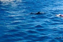Hombre joven que bucea en el Mar Rojo y que mira el delfín imagen de archivo libre de regalías