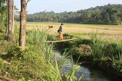 Hombre joven que cruza un río Imágenes de archivo libres de regalías