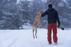Hombre joven que entrena a su golden retriever del perro Fotografía de archivo