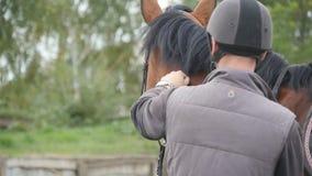 Hombre joven que frota ligeramente el caballo marrón al aire libre Caricias masculinas del jinete y acariciar el semental en la n metrajes