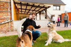 Hombre joven que juega con sus perros en jardín Foto de archivo