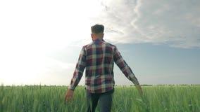 Hombre joven que mira al prado de la cebada durante paseo en campo y que goza del aire fresco y la belleza de la naturaleza encen metrajes