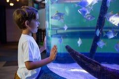 Hombre joven que mira pescados en un tanque foto de archivo
