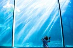 Hombre joven que mira una natación de la tortuga de mar fotos de archivo