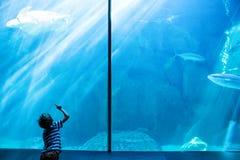 Hombre joven que mira una natación de la tortuga de mar imágenes de archivo libres de regalías