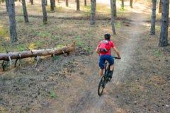 Hombre joven que monta la bici de montaña en el pino Forest Adventure y el concepto del viaje Fotografía de archivo libre de regalías