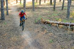Hombre joven que monta la bici de montaña en el pino Forest Adventure y el concepto del viaje Foto de archivo libre de regalías