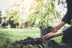 Hombre joven que planta el árbol en el jardín como Día de la Tierra y reserva fotos de archivo