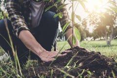 Hombre joven que planta el árbol mientras que riega un árbol que trabaja en imágenes de archivo libres de regalías