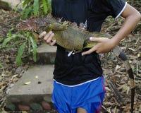 Hombre joven que sostiene una iguana verde Foto de archivo libre de regalías