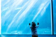 Hombre joven que toca un acuario gigante imagen de archivo