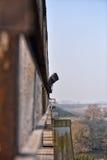 Hombre joven triste que se coloca al borde del puente Mirada de thi ausente Foto de archivo