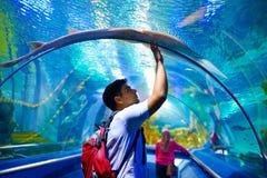 Hombre joven, turista que toca el vidrio debajo de calambre-pescados, mientras que visita el túnel subacuático marino Imagenes de archivo