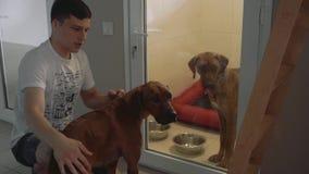 Hombre joven y dos perros en la enfermería para los animales almacen de metraje de vídeo
