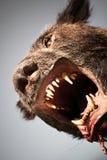 Hombre lobo Imagenes de archivo
