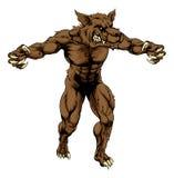 Hombre lobo o mascota del lobo de los deportes Fotografía de archivo libre de regalías