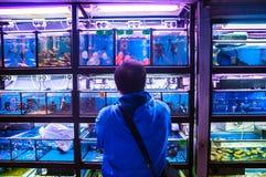 Hombre local que mira los pescados tropicales en una tienda de animales en Tung Choi Street, Mong Kok, Kowloon foto de archivo