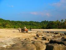 Hombre local que monta un carro del buey por la playa, Myanmar Fotografía de archivo