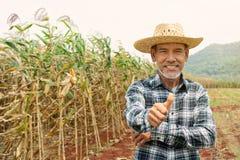 Hombre maduro feliz del retrato el más viejo está sonriendo Viejo granjero mayor con el pulgar de la barba blanca encima de senti fotos de archivo
