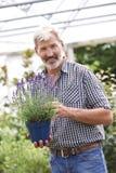 Hombre maduro que elige las plantas en el centro de jardinería Imagenes de archivo