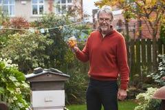 Hombre maduro que mira las abejas de Honey Produced By His Own foto de archivo libre de regalías