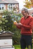 Hombre maduro que mira las abejas de Honey Produced By His Own imagen de archivo libre de regalías