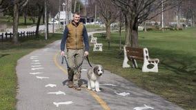 Hombre mayor apto que camina un perrito de la mezcla de St Bernard fotos de archivo