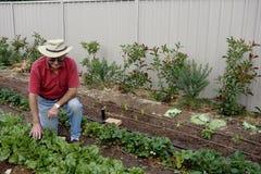 Hombre mayor en el remiendo vegetal Fotos de archivo libres de regalías