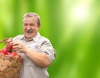 Hombre mayor feliz con las manzanas en cubo imágenes de archivo libres de regalías