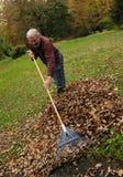Hombre mayor que rastrilla las hojas Imagenes de archivo