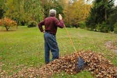 Hombre mayor que rastrilla las hojas imágenes de archivo libres de regalías