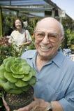 Hombre mayor que se coloca en el cuarto de niños de la planta que sostiene el retrato de la planta del cactus Fotos de archivo