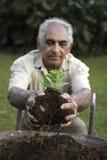 Hombre mayor que sostiene la plántula en ecológicamente suelo sobre una carretilla Imagenes de archivo
