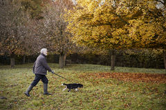 Hombre mayor que toma el perro para el paseo en Autumn Landscape Imagen de archivo