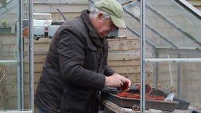 Hombre mayor que trabaja en su invernadero, cultivando un huerto almacen de metraje de vídeo