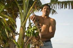 Hombre nativo de Nicaragua con los llantenes del plátano Foto de archivo libre de regalías