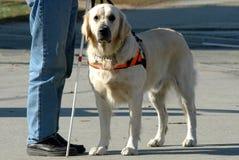 Hombre oculto y su perro Foto de archivo libre de regalías
