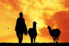 Hombre peruano con los lamas en la puesta del sol Fotos de archivo